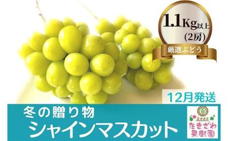 【12月発送】冬の贈物 たきざわ果樹園の冷蔵シャインマスカット2房(1kg以上)
