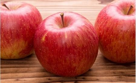 [0553]【先行予約】ファームたんぽぽの完熟りんご サンふじ 特秀5kg 長野県飯綱町