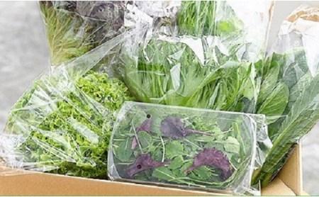 M06S05 水耕栽培 新鮮 葉物野菜Aセット