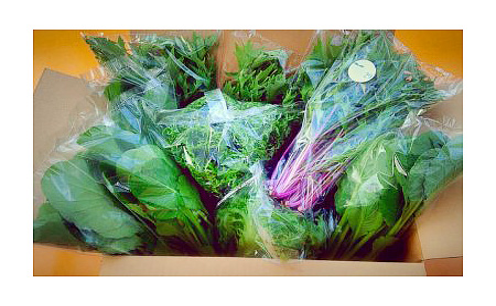 M08S31 水耕栽培 新鮮 葉物野菜Bセット