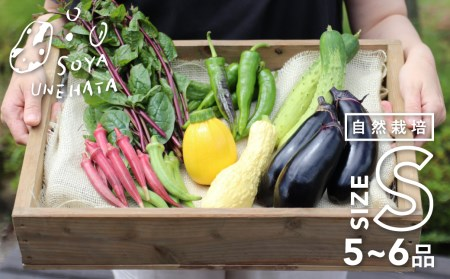 野菜セット 6~7品 自然栽培 野菜BOX・Sサイズ[A0092]