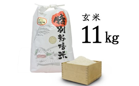【先行予約】安八町産 ハツシモ (ぎふクリーン米)11kg 令和3年産【玄米】