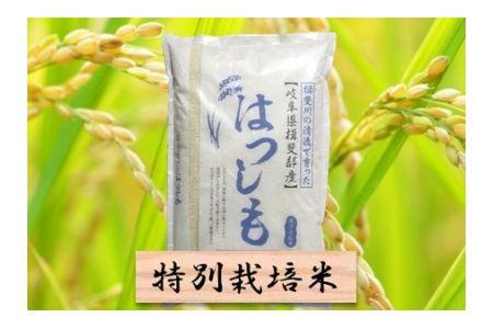 【2600-0419】特別栽培米 ハツシモ 精米10kg または 玄米1割増