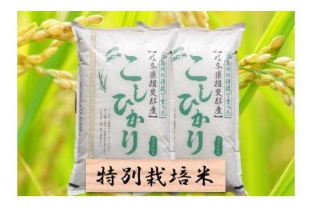 【2600-0422】特別栽培米 コシヒカリ 精米20kg または 玄米1割増