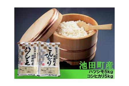 【2600-0304】【H30年新米】池田町産ハツシモとコシヒカリ 5kgずつ計10kg