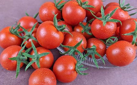 【中富良野町】寺坂農園ミニトマト ほれまる 2kg 【BF-005】
