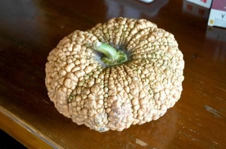 019_無農薬・有機栽培見付かぼちゃ[2019]