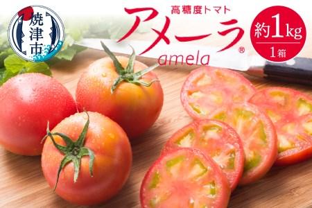 a10-371 アメーラトマト