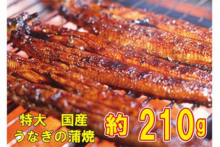 a20-013 うなぎの蒲焼き 特大サイズ(約210g)