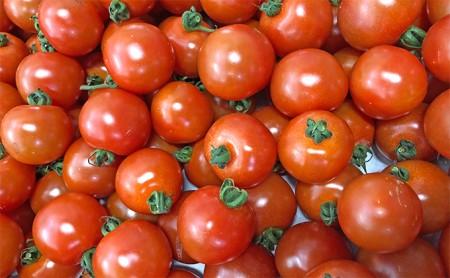 [№5565-0118]御殿場プチトマト あっこひめ 6パック(約1.2kg)
