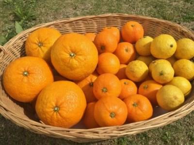 (Da-03)湯の花 季節のフルーツセット3か月分