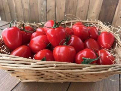 4月~6月の発送 甘さ抜群!!トマト嫌いも食べられるトマトベリー≪先行受付≫