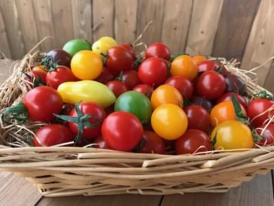 【お試し】『旬』にお届け まるでトマトの宝石箱!ジュエリートマト