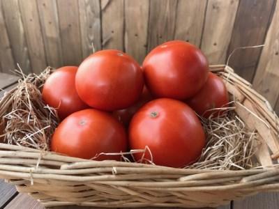 【お試し】『旬』にお届け プレミアムフルーツトマト