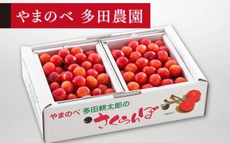 さくらんぼ 佐藤錦 バラ詰 Lサイズ 1kg (500g×2)「やまのべ多田農園」 F2Y-1374