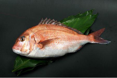 H173 紀州梅まだい(鮮魚)