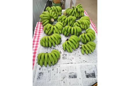 超希少!美浜町産バナナ(モッチリ系の品種)たっぷり2kg入り!