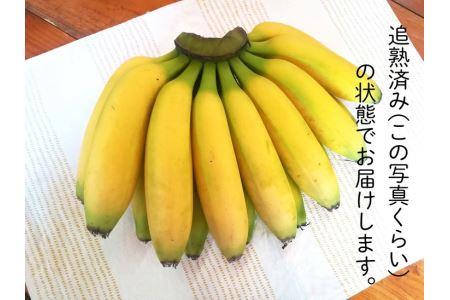 超希少!国産完熟バナナ(美浜町産)モッチリ系の品種をたっぷり3kgすぐ食べられる状態でお届け!