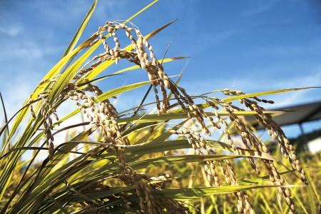 FS-02 世界かんがい施設遺産・国登録記念物「立梅用水」の水で減農薬米をあなたのために育てます!