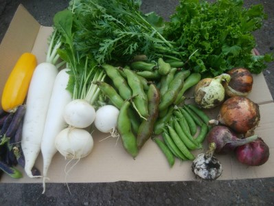 NH-02 農薬をいっさい使わず栽培した季節の野菜定期便(4回コース)