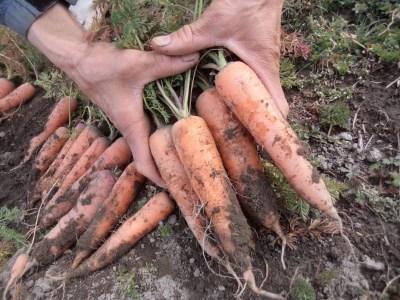 AF-01 旬の無農薬野菜とアイガモ農法米のセット