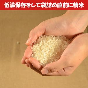 【2021年8月上旬発送】D18令和2年三重県産コシヒカリ 10kg×2袋(20kg)