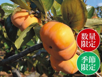 玉城産 早生次郎柿 7kg 数量限定(クレジット申し込み限定)