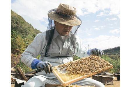 国産 はちみつ 百花蜜 500g×2本入りセット/希少 純 ハチミツ 蜂蜜 ハニー 養蜂 伊勢志摩
