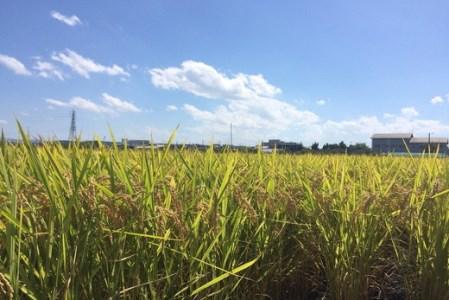 【新米】令和3年産 環境こだわり米「みずかがみ」白米【10㎏×1袋】【K074SM1】