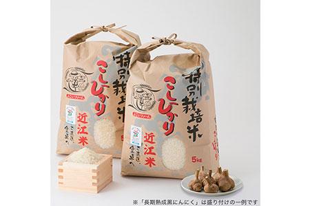 【T-531】よこいファーム 特別栽培米コシヒカリA【頒布会12カ月】