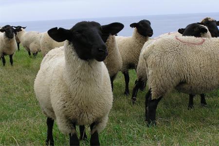 [207]焼尻めん羊100%使用 手編みニット帽(焼尻ブルー)