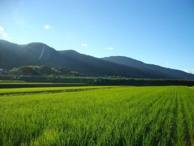 自然農法<栽培期間中農薬不使用>玄米5kg≪令和元年 京都丹波産 無農薬米栽培向き 厳選品種 にこまる≫