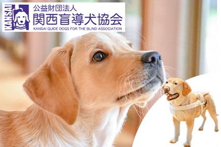盲導犬訓練支援寄付~「行きたい場所に、安心していける社会に…」~(100.000円)