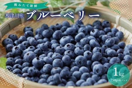 木津川市産ブルーベリー1kg