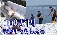 S008 地曳網漁業体験&新鮮な海の幸バーベキュー!