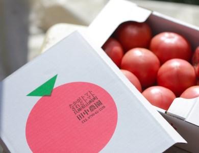 AP2 田中農園自慢のトマト大玉4kg