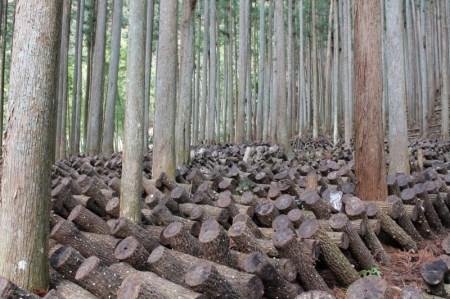 【2801-A20】吉野の原木生しいたけ《新鮮しいたけ おかもと》