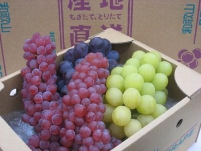 和歌山県橋本市 種なしぶどう旬の詰め合わせ