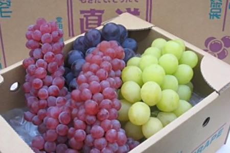 堂田ぶどう園 種なしぶどう旬の詰め合わせ ラッキーコース(約1.4kg~2kg)