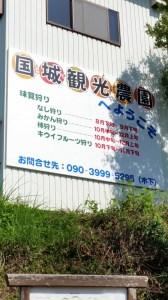 国城観光農園 紀の川柿(11~12個・約4kg)