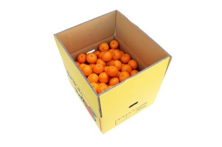 柳フルーツ園 小玉みかん(約10kg) ※受付再開(令和元年11月11日)