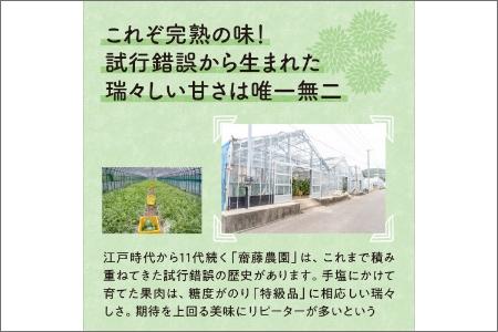 斎藤農園のアールスメロン(マスクメロン)4玉 6kg程度≪先行予約 2021年7月以降発送分≫