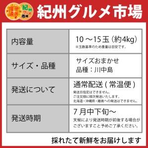 【高級】和歌山ブランド あら川の桃 【川中島】 約4Kg ※北海道、沖縄、離島は発送不可