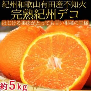 果肉プリプリ♪紀州デコ 約5kg ※2020年2月末頃から発送の商品になります 【魚鶴商店】◆◆