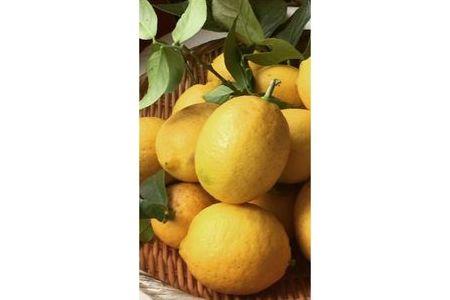 国産有田レモン3kg【マルユー園】◆◆