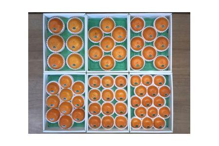 【2625-0041】『柑橘の大トロ』ハウスせとか厳選12玉入【南泰園】