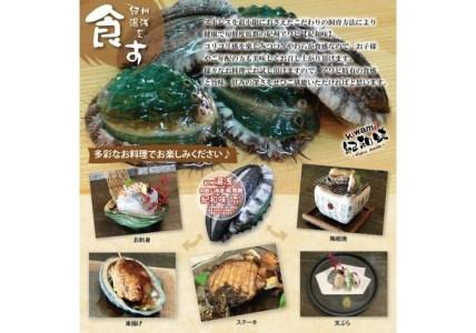 やわコリ食感紀州活アワビ 【5個入】【湯浅町漁業生産組合】