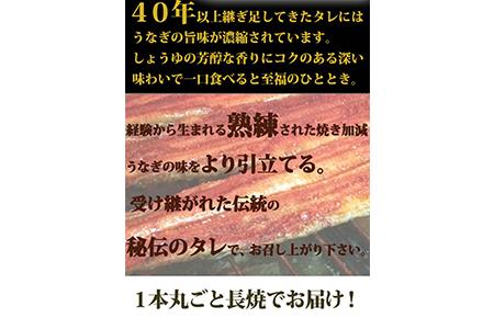 大型サイズ   ふっくら柔らか国産うなぎ蒲焼き 約2人前 化粧箱入 【魚鶴商店】◆