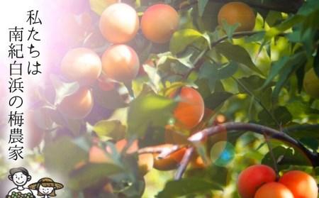 【梅農家の厳選手づくり梅干】【紀州南高梅】樽出しそのまま長期熟成 白干梅 (2Lサイズ、450g)