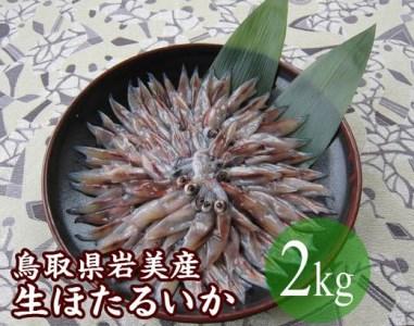 【E-31】鳥取県岩美産 生ほたるいか